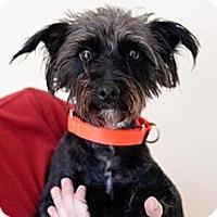 Adopt A Pet :: Cosmo - Mission Viejo, CA