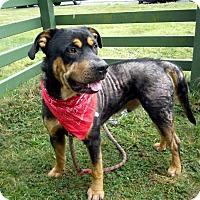 Adopt A Pet :: Dozer - Crescent City, CA