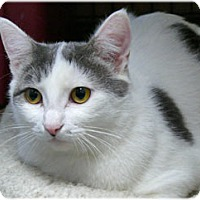 Adopt A Pet :: Felice - Milford, MA
