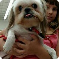 Adopt A Pet :: Blueberry - Gainesville, FL