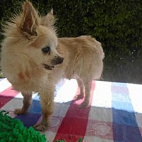 Adopt A Pet :: COLE ~ PICK ME! - Fairfield, CA