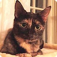 Adopt A Pet :: Ginny2 - Walworth, NY