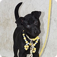 Adopt A Pet :: Vinnie - Surrey, BC