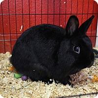 Adopt A Pet :: Thumper - Elyria, OH