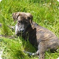 Adopt A Pet :: ZIP - McKinleyville, CA