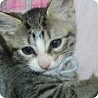 Adopt A Pet :: Neena - Clearfield, UT