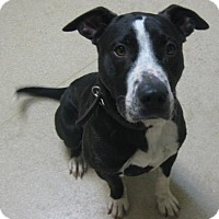 Adopt A Pet :: Prince - Gary, IN