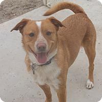 Adopt A Pet :: Oliver - Henderson, NV