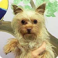 Adopt A Pet :: Phoebe - Fresno, CA