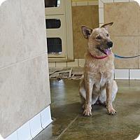 Adopt A Pet :: ROSE - Poteau, OK