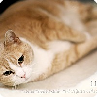 Adopt A Pet :: Lilly - Appleton, WI