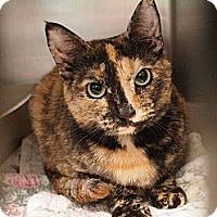 Adopt A Pet :: Madison - Ocean City, NJ