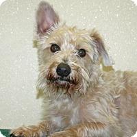 Adopt A Pet :: Gatsby - Port Washington, NY