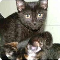 Adopt A Pet :: George - Winter Haven, FL