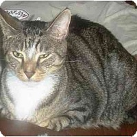 Adopt A Pet :: Toby - Summerville, SC