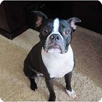 Adopt A Pet :: Guiness - Temecula, CA