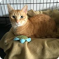 Adopt A Pet :: Everett - Speonk, NY