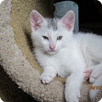 Adopt A Pet :: Teddi and Marty - Southington, CT