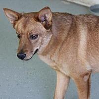 Adopt A Pet :: Duffy - Phoenix, AZ
