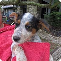 Adopt A Pet :: Camila - Wharton, TX
