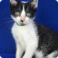 Adopt A Pet :: Tonka - Carencro, LA