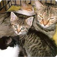 Adopt A Pet :: EMMA - Warren, OH