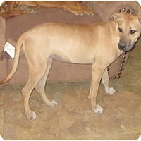 Adopt A Pet :: Karly - shy cuddle bug - Copperas Cove, TX