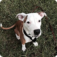 Adopt A Pet :: Sparkle - Williston, FL