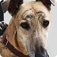 Adopt A Pet :: Ferb - Orange County, CA