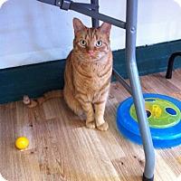 Adopt A Pet :: Trent - Speonk, NY