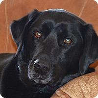 Adopt A Pet :: July - Prole, IA