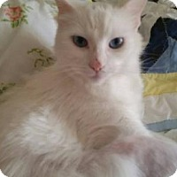 Adopt A Pet :: Marilyn - Savoy, IL