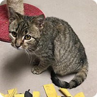 Adopt A Pet :: Sherman - Chestertown, MD
