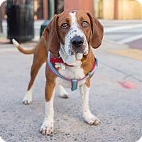 Adopt A Pet :: Patsy - Burlington, NC