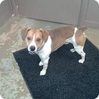 Adopt A Pet :: # 2 STRAY Avail.3/14 - Carrollton, OH