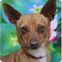 Adopt A Pet :: MURRIEL - Red Bluff, CA