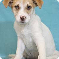 Adopt A Pet :: Courtney - Waldorf, MD