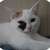 Adopt A Pet :: Kalliopie - Harrisburg, NC