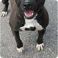 Adopt A Pet :: Babes Urgent! - Monroe, CT