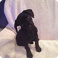Adopt A Pet :: Zack - Marlton, NJ