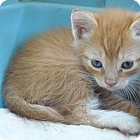 Adopt A Pet :: Dorado - Island Park, NY