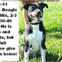 Adopt A Pet :: # 391-11 @ Animal Shelter - Zanesville, OH