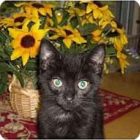 Adopt A Pet :: Chad - Riverside, RI