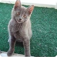 Adopt A Pet :: Grayson -  Glynda's son - Riverside, RI