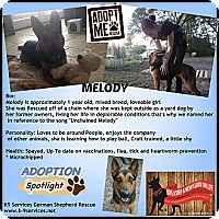 Adopt A Pet :: Melody - Green Cove Springs, FL