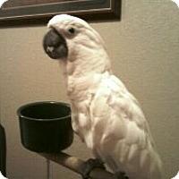 Adopt A Pet :: Tia - Lenexa, KS