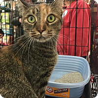 Adopt A Pet :: Autumn - Sterling Hgts, MI
