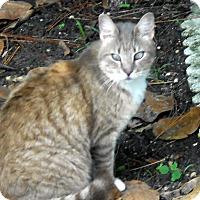 Adopt A Pet :: Sabrina - Naples, FL
