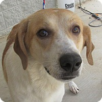 Great Pyrenees/Coonhound (Unknown Type) Mix Dog for adoption in Cullman, Alabama - Madeline