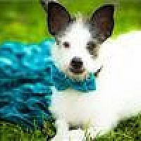 Adopt A Pet :: Petey - Freeport, NY